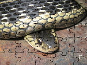 Click to Play Common Garter Snake Jigsaw Puzzle